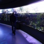 Freshwater lake exhibit