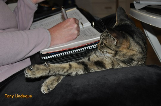 The Number Two Cat understands the importance of keeping a logbook
