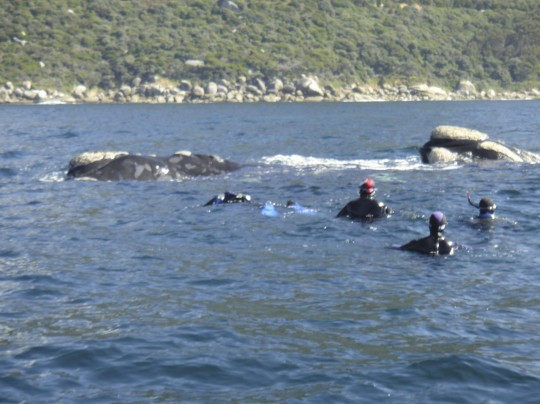 Divers and whales