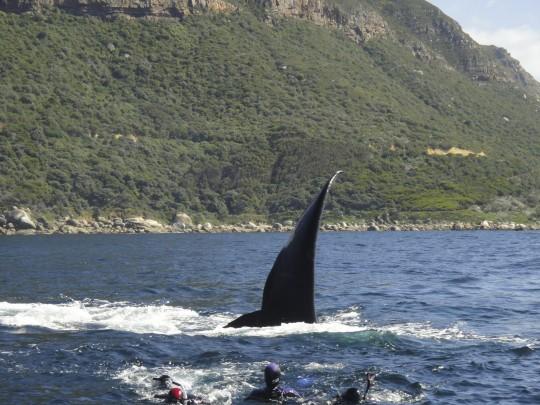 Whale alert!