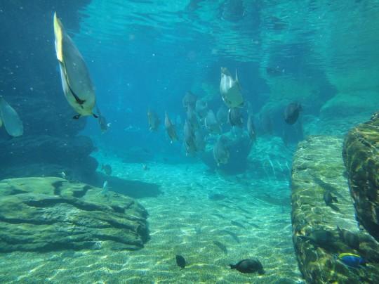 Lagoon tank at uShaka Marine World