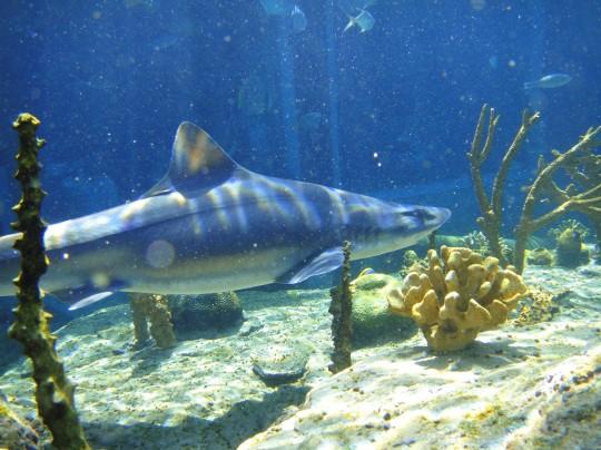 Hound shark