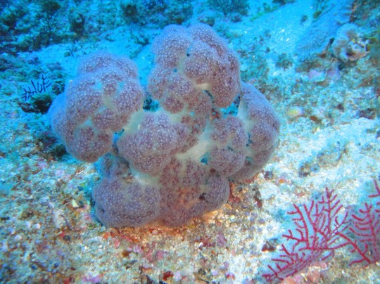 Dive sites (Sodwana): Deep Sponges