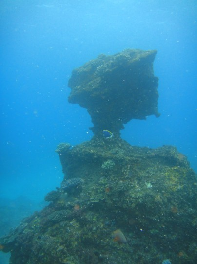 Anvil on Two Mile Reef, Sodwana