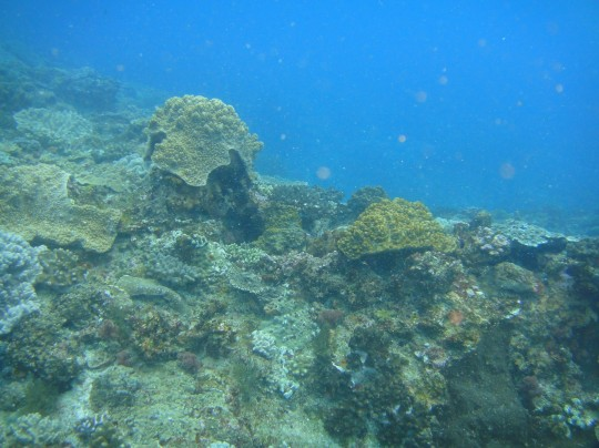 Pinnacles, Two Mile Reef, Sodwana
