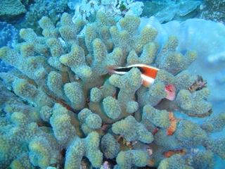 Coral in Sodwana