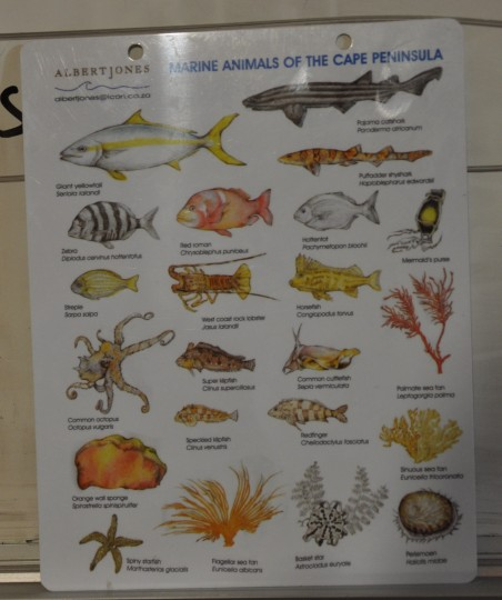 SURG Marine Animals of the Cape Peninsula slate