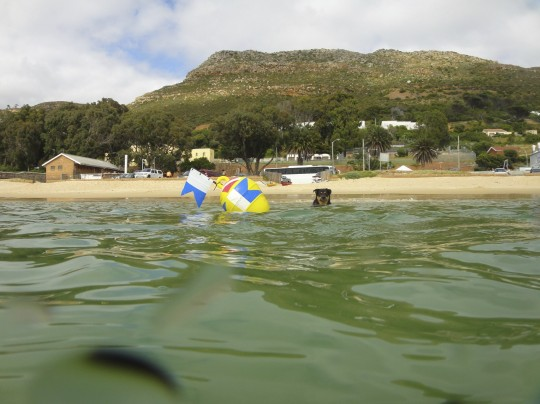 Scuba pooch and the buoy