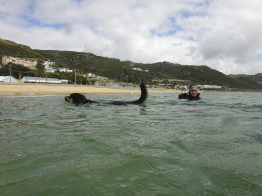 Scuba pooch gets some lessons from Tony