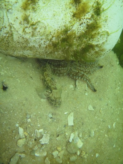 Update on the artificial reef: 27 days