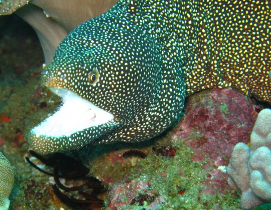 Moray eel (not the same one!)