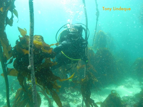 I demonstrate how useful kelp is in surgy conditions, at A Frame