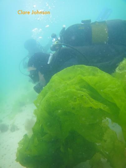 Tony behind some sea lettuce