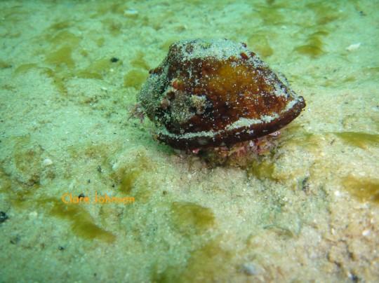 Sea life: Hermit crabs