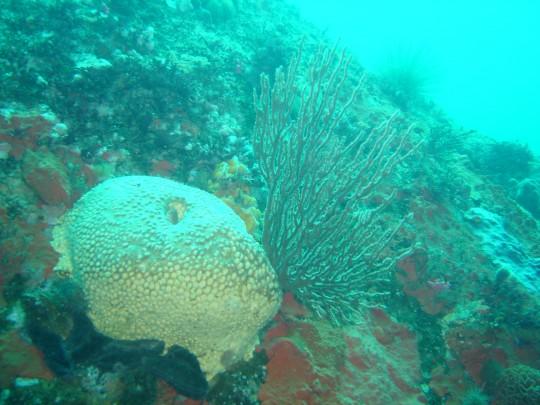 Coral at North Paw
