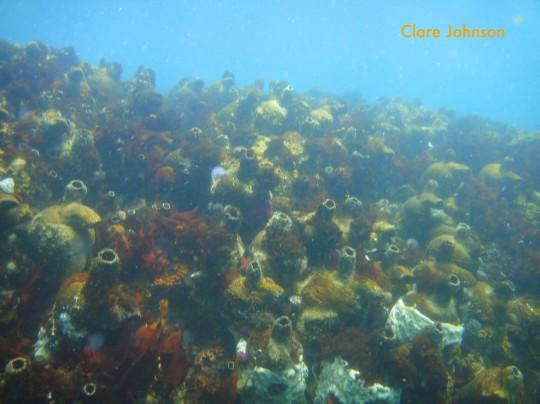 Red bait zone near the MV Romelia