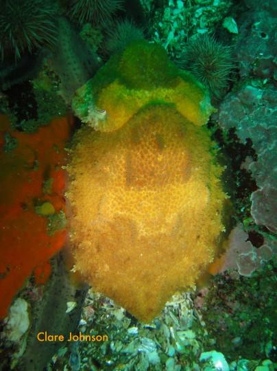 Cuttlefish at North Paw