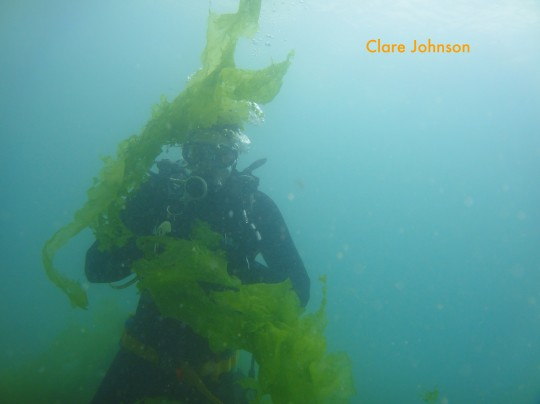 Corne playing with sea lettuce