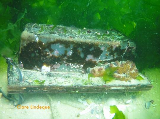 Mask box covered with algae