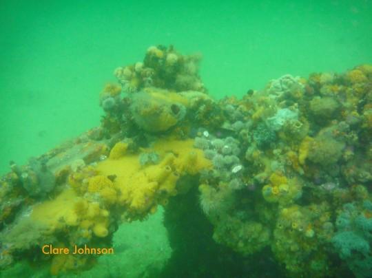 Encrusting marine life