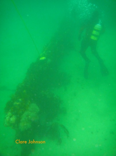 A diver exploring the Eastern Ark Rock wreck