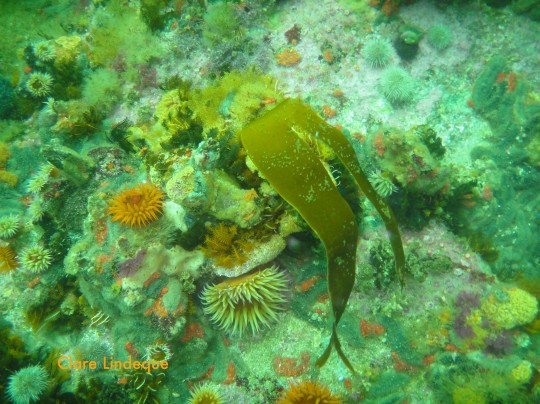 Reef life at Castor Rock