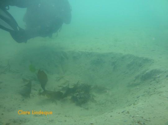 Tony swimming over a ray hole at Long Beach