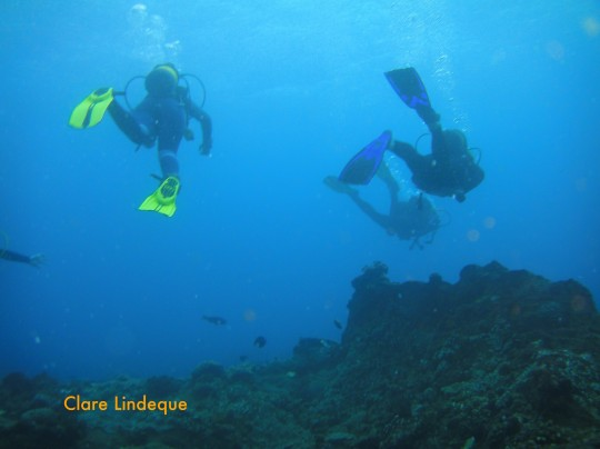Divers over the coral