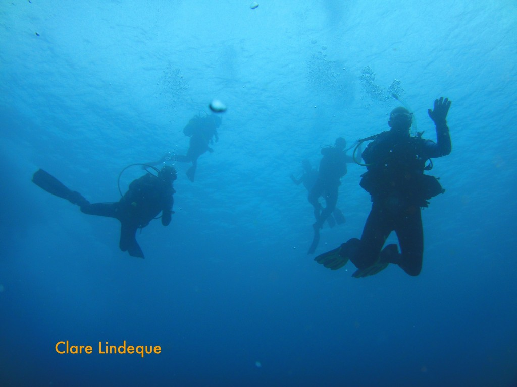 Divers descending onto the reef