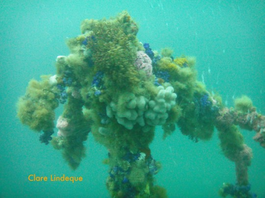 Encrusted wreckage of the MV Rockeater