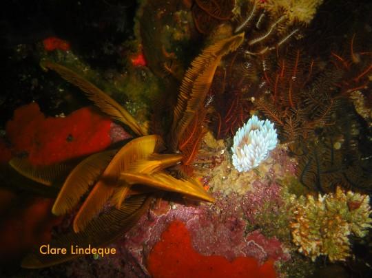 Dive sites: Wonder Reef