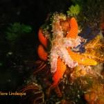 Starfish pile-on!