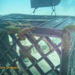 Kelp lice in residence