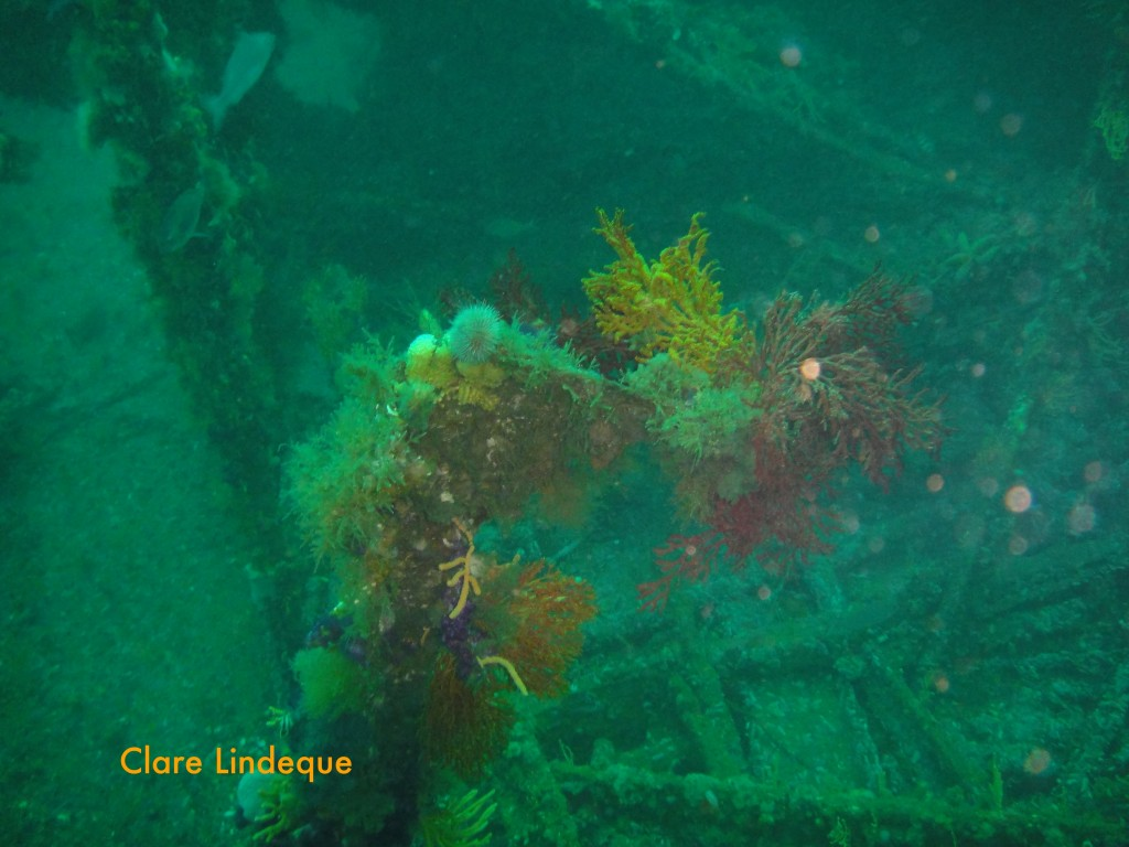 The wreck is heavily encrusted with invertebrate life