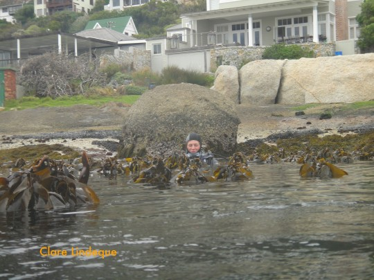 Kate stuck in the kelp