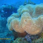 Kirstin passing behind some coral