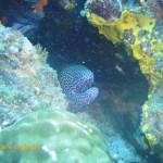 Honeycomb moray says hello!