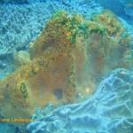 Wall sponge