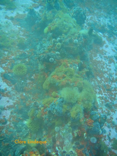 The reef has a low, rocky relief