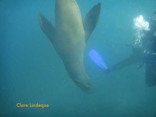 Seal at the safety stop