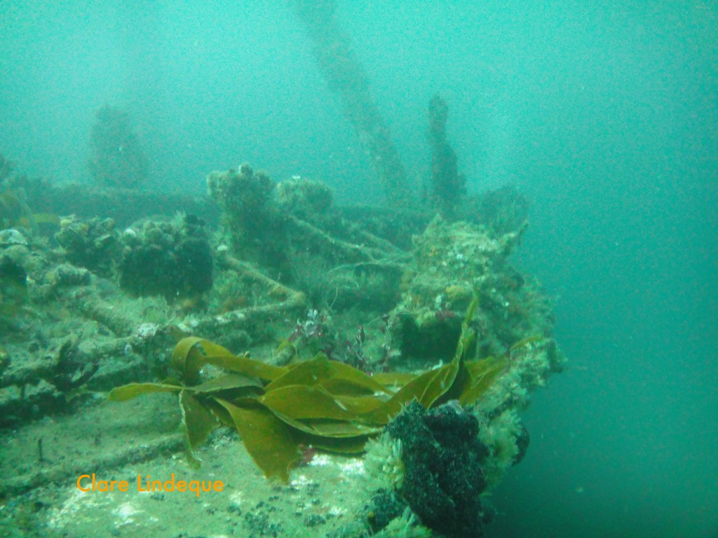 Wreckage near the bow of the Aster