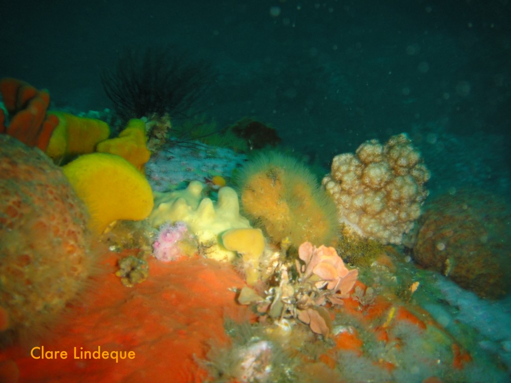 Colourful sponges and corals