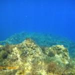 Damselfish on the reef