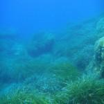 Meadows of sea grass