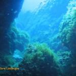 Cracks in the reef are fun to swim through