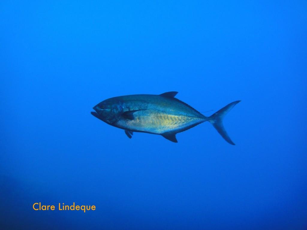 A truly majestic fish
