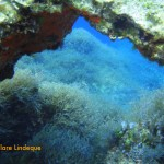 Another natural arch in the limestone reef