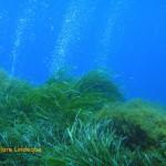 Bubbles, sea grass and damselfish