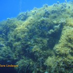 There is rich plant growth into quite deep water, owing to the clarity of the sea in Malta