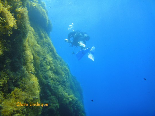 Divemaster Publio swims back to the entry/exit along the wall at Cirkewwa